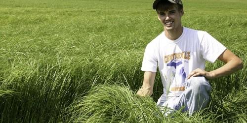 Ot Tipi Teff Grass Tohumu Nereden Alınır ?