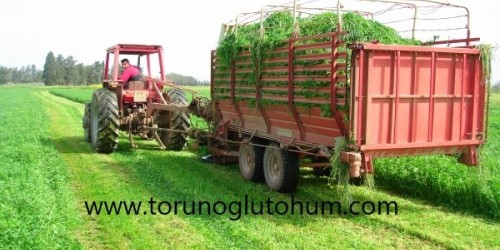 İthal Ryegrass Tohumu