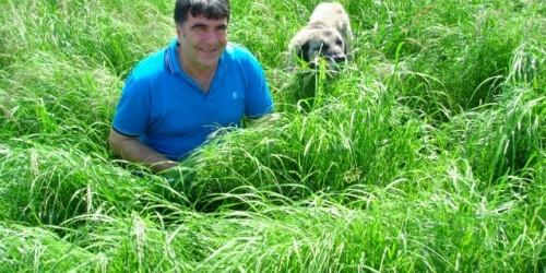 Teff Grass Otu Tohumu Fiyatları