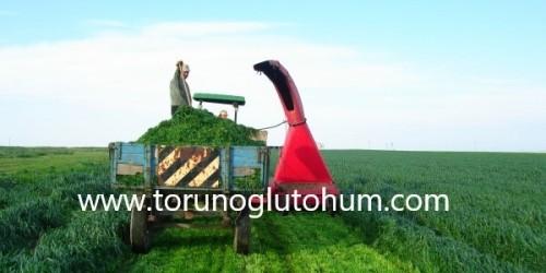 Ryegrass Tohumu 25 KG